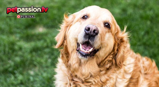 alimentazione corretta per cani anziani