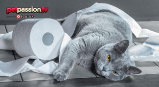 marachelle-gatti
