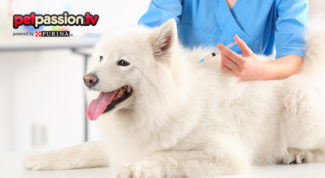 Vaccino cane cimurro
