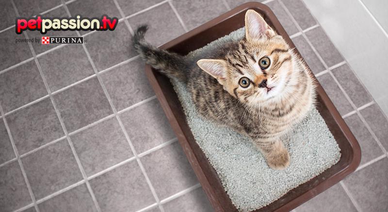 Benessere Degli Animali Consigli Per Cani E Gatti Petpassion