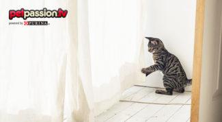 educare-gatto