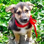 Daisy_cucciolo-in-adozione