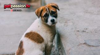 soccorrere un cane abbandonato