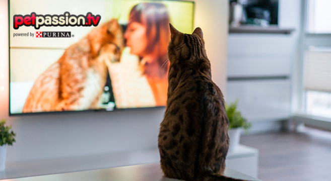 film con gatti