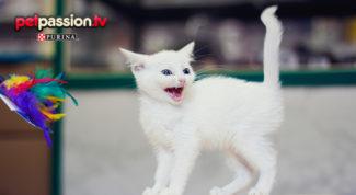 aggressività del gatto cause