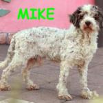 cane anziano adozioni