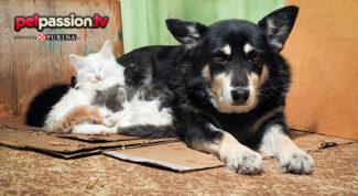 soccorso animali feriti