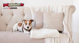come non far salire un cane sul divano
