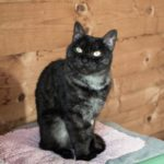 06.07_adozione gatti maschi_2