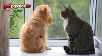 sindrome abbandono cani gatti