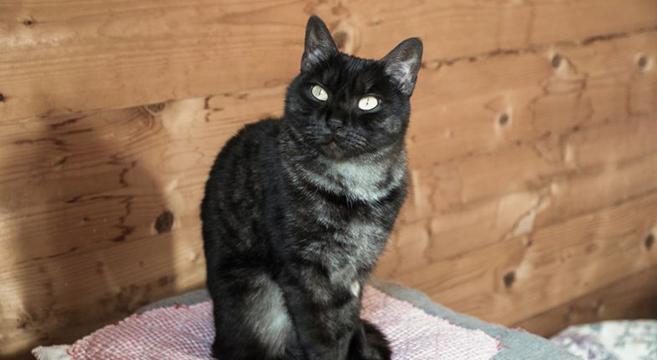 adozione gatti petpassion
