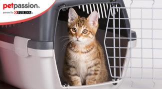 viaggiare con il gatto