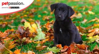 cane-autunno