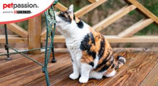 gatto marca il territorio