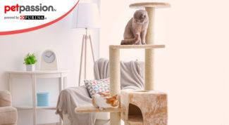 gatti comportamento