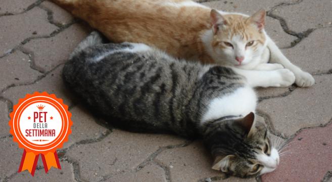 gatti trovatelli pet della settimana
