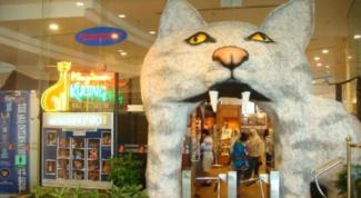 luoghi mondo gatti adorati