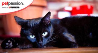 Festa gatto nero