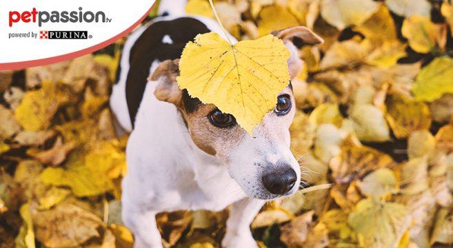 Animali domestici in autunno
