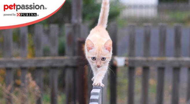 equilibrio gatti