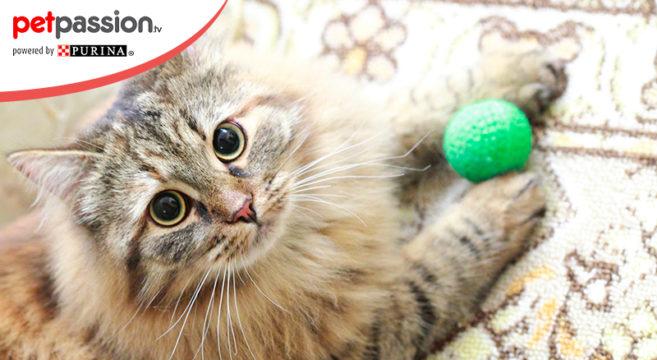 giochi intelligenti per gatti