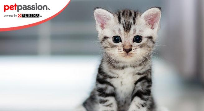Mantello gatti