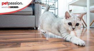 Razze gatti appartamento