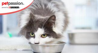 Arginina gatto
