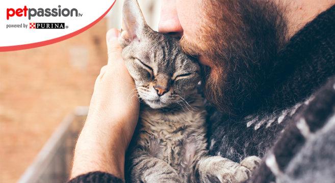 Pet Therapy I Benefici Sulla Salute Grazie Ai Gatti