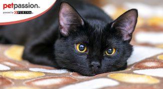 Giorno del gatto nero