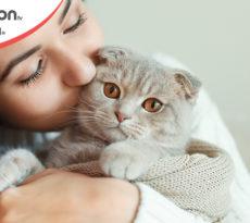 Fiducia gatto