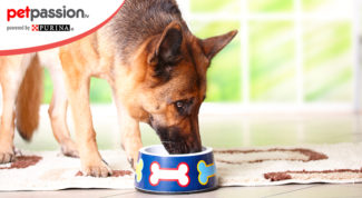 Alimentazione cane età