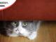 Nascondigli gatto
