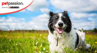 Colore cane longevità