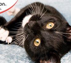 Cura unghie gatto