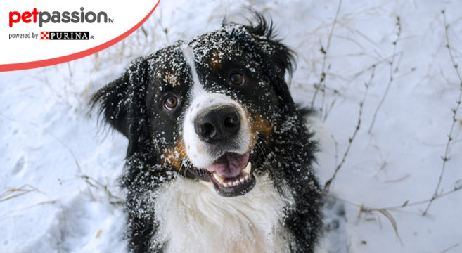 Giochi cane neve