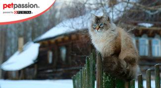 Abitudini gatto inverno