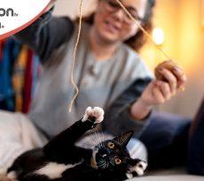 giochi per gatto fai da te. Ecco i più originali