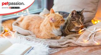 Favorire convivenza gatti