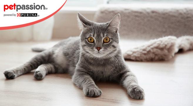 Casa accogliente gatto