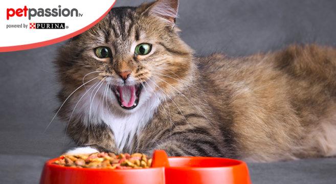 Gatto schizzinoso