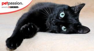 Gatto nero razze diffuse