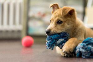 Cucciolo di cane che gioca