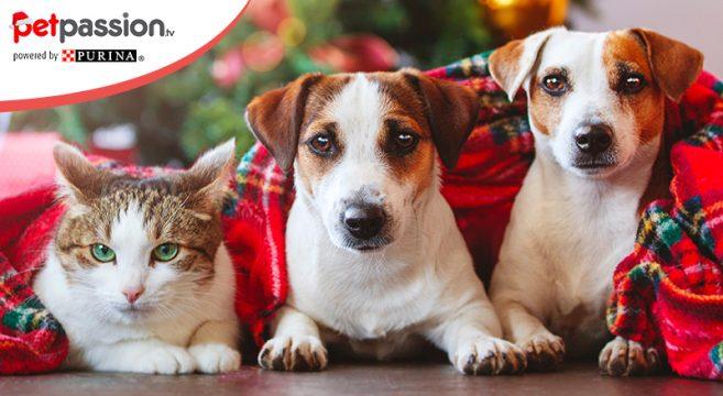 Immagini Natalizie Con Cani.Natale Tempo Di Vacanze Con Il Cane E Il Gatto