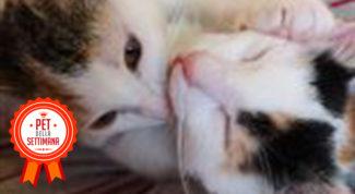 pet della settimana community