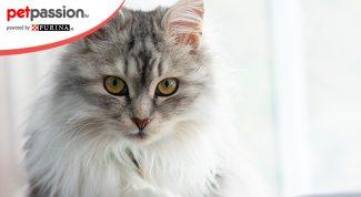 Forfora del gatto