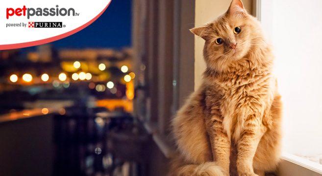 Il gatto è un animale notturno