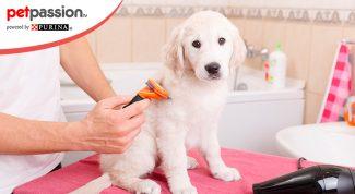Spazzolare il pelo del cane
