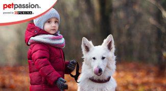 Cani e bambini che giocano