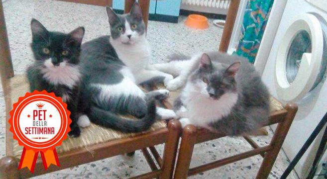 Tre mici inseparabili